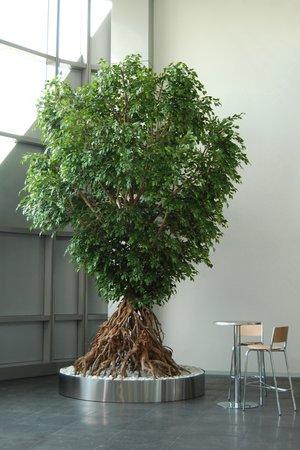 Broschyr Växter 2016-2017